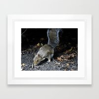 Squirrel Forage Framed Art Print