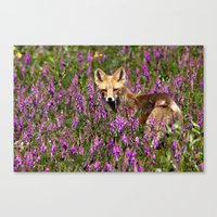 Tip Toe Through the Fireweed Canvas Print