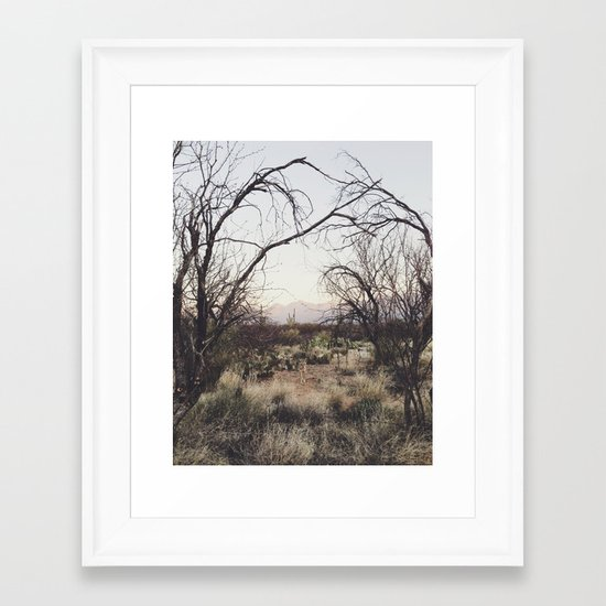 Coyote Canopy Framed Art Print