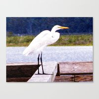 Egret Regret Canvas Print