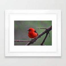 Scarlet Tanager - A Nature Art Print Framed Art Print