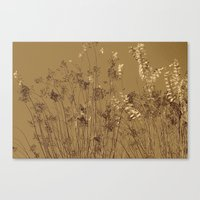 Thin Branches Sepia Canvas Print