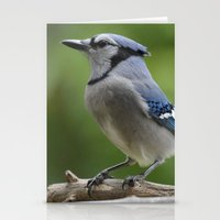 A Northern Blue Jay Stationery Cards