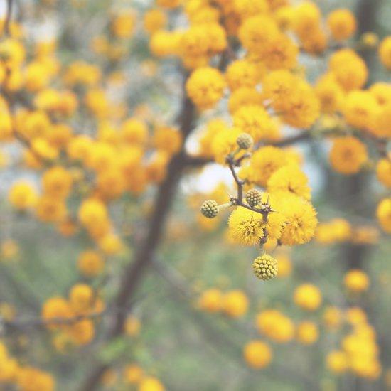 pollen infestation ... don't breathe! Art Print