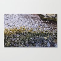 La Jolla Rocks Canvas Print