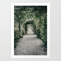 Arbor Covered Gravel Path to the Fountain and Pergola at Bradley Creek, Airlie Gardens Art Print