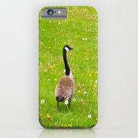 Goose In A Field Of Flow… iPhone 6 Slim Case