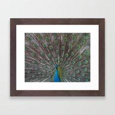 peacock. Framed Art Print