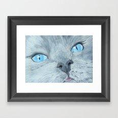 Blossom the Ragdoll Cat Framed Art Print