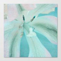 Sweet Tulip Canvas Print