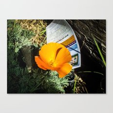 A Bright Orange Poppy Canvas Print