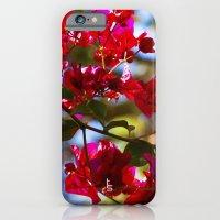 Bougainvillea I iPhone 6 Slim Case