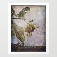 Rural Sky Sunflower Art Print