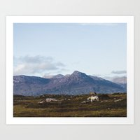 Connemara  - Horse and Mountains Art Print