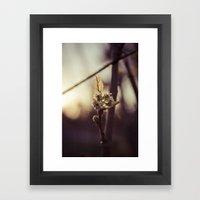 Raspberry Sprout Framed Art Print