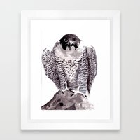 falcon 1 Framed Art Print