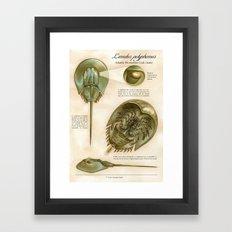 Atlantic Horseshoe Crab Framed Art Print