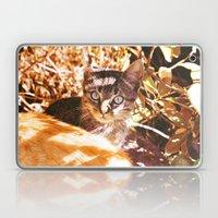 Cat in the shadows Laptop & iPad Skin