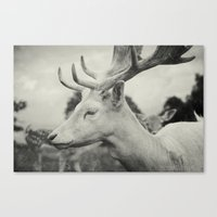 Last King (Ultimate) Canvas Print