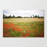 Poppy Field. Canvas Print