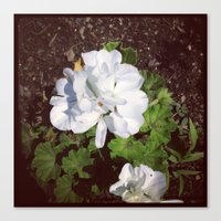 Flower#2 Canvas Print