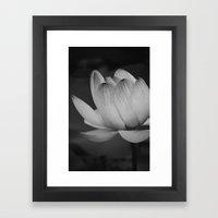 Lotus Blossom Flower 19 Framed Art Print