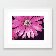 Daizy Framed Art Print