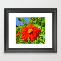 Tithonia With Bee, Flora… Framed Art Print