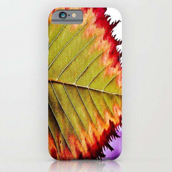 Fall Splendor iPhone & iPod Case