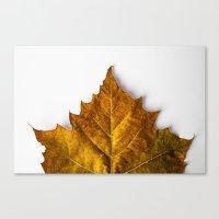 Autumn Leaf - Yellow Canvas Print