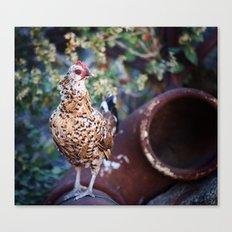 Chicken II Canvas Print