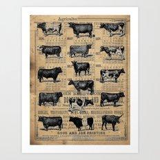 Vintage 1896 Cows Study on Antique Lancaster County Almanac Art Print