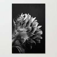 Canvas Print featuring Sunflower (B&W) by Lawson Images