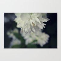White Blossom Dew Canvas Print