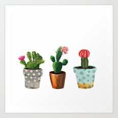 Three Cacti With Flowers On White Background Art Print