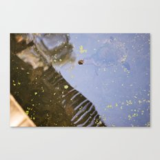 Turtle Pond Canvas Print