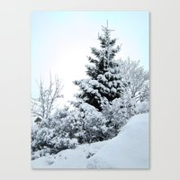 Natures Christmas Tree Canvas Print