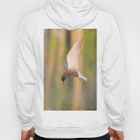 Black Tern in Flight Hoody
