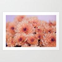 Chrysanthemum Flowers 86… Art Print