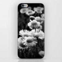 Wild Fleabane iPhone & iPod Skin