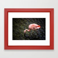 Flamingo Framed Art Print