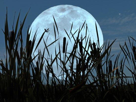 Between the Moon and Marsh Art Print