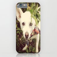 iPhone & iPod Case featuring Looking Lobo by Libby B