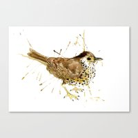Mr Thrush Canvas Print