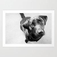 Black Labrador Art Print