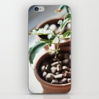 planter iPhone & iPod Skin