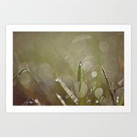 Dew Drop Art Print