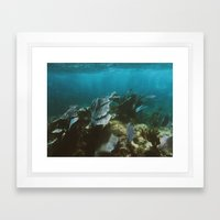 Mexican Caribbean Sealife Framed Art Print
