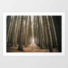 Sugar Pine Walk Art Print