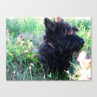 Miss Candy Canvas Print